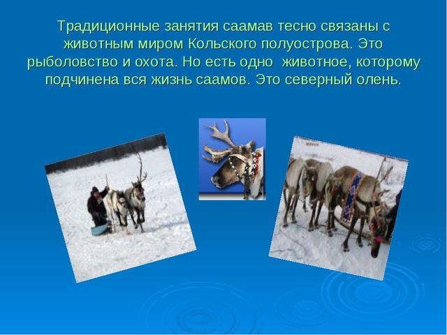 Традиционные занятия саамав тесно связаны с животным миром Кольского полуостр...