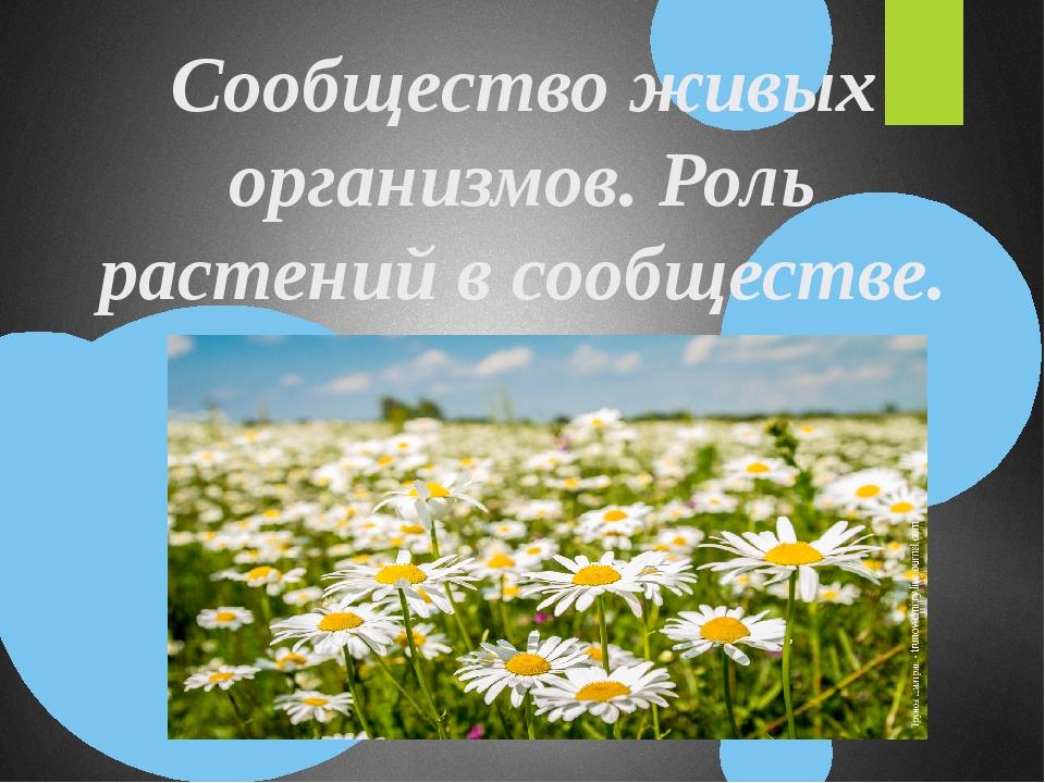 Сообщество живых организмов. Роль растений в сообществе.