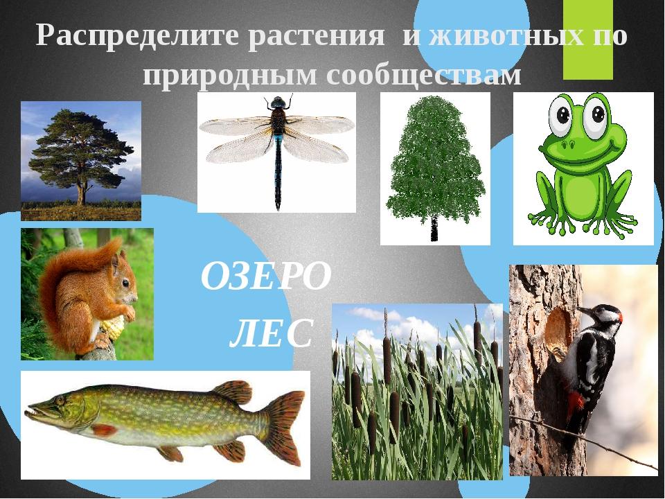 Распределите растения и животных по природным сообществам ОЗЕРО ЛЕС