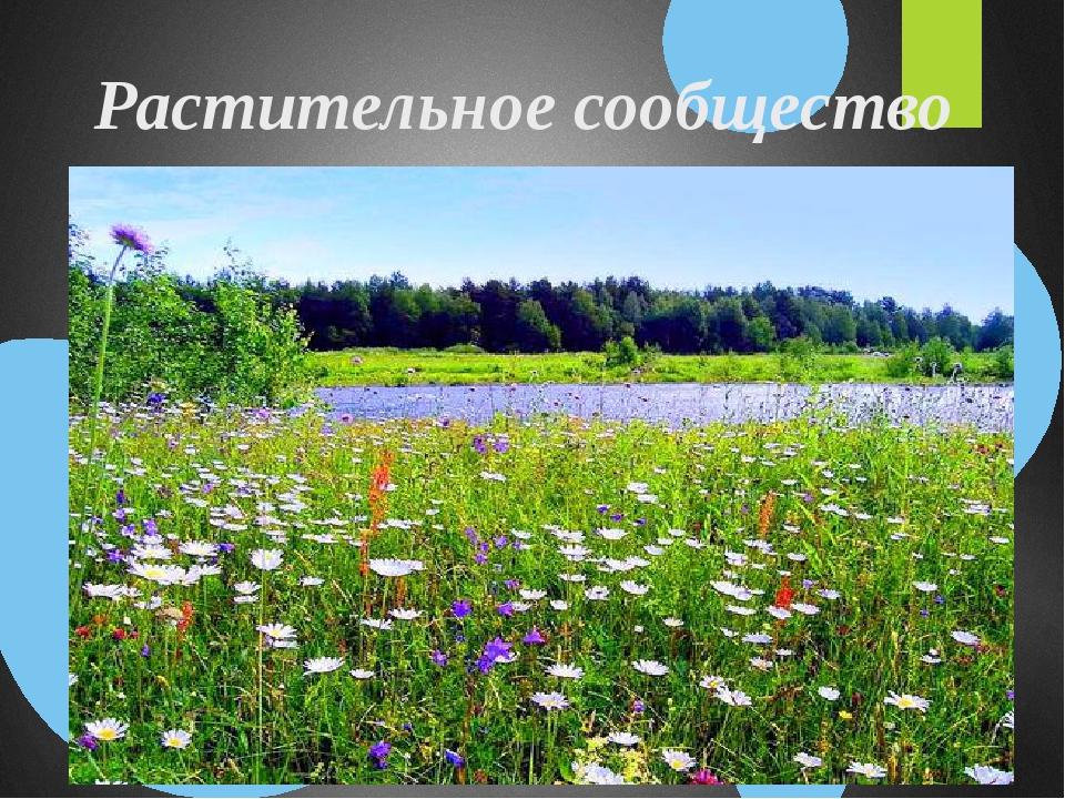 Растительное сообщество