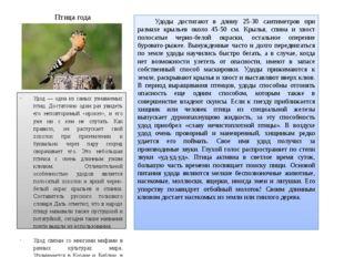 Птица года Удоды достигают в длину 25-30 сантиметров при размахе крыльев око