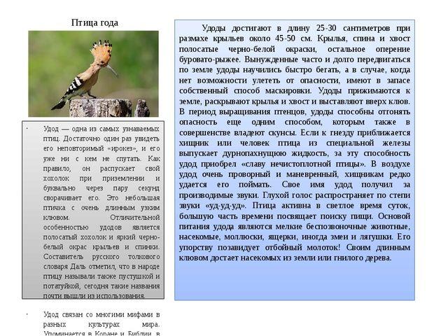 Птица года Удоды достигают в длину 25-30 сантиметров при размахе крыльев око...
