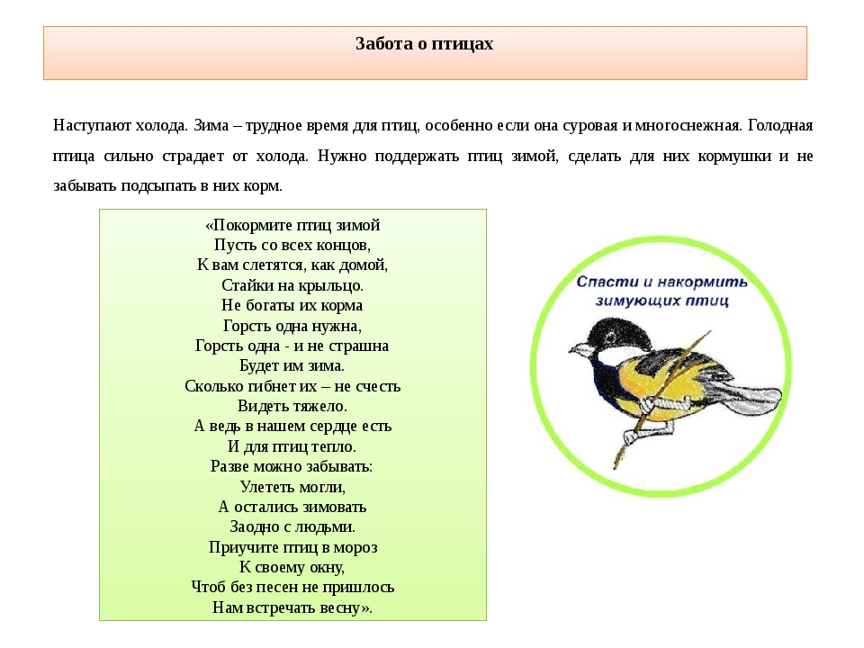 Забота о птицах Наступают холода. Зима – трудное время для птиц, особенно есл...