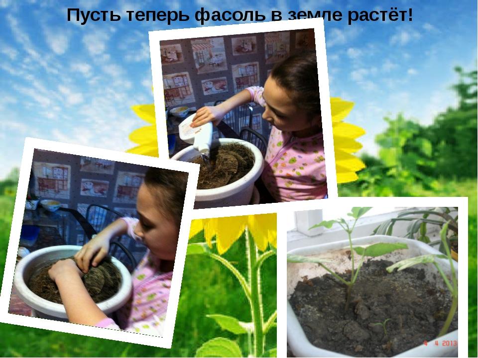 Пусть теперь фасоль в земле растёт!