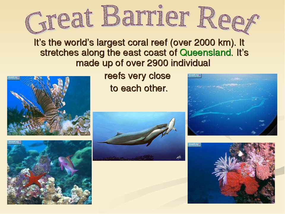 It's the world's largest coral reef (over 2000 km). It stretches along the ea...