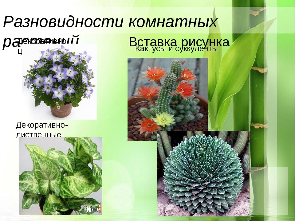 Разновидности комнатных растений Декоративно-цветущие Декоративно-лиственные...