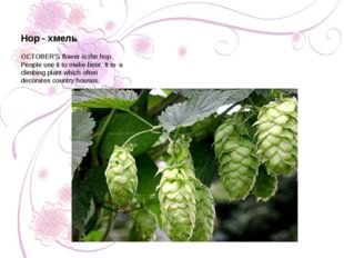 OCTOBER'S flower is the hop. People use it to make beer. It is a climbing pla