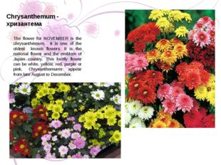 The flower for NOVEMBER is the chrysanthemum. It is one of the oldest known f