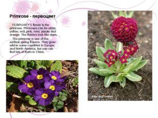 Primrose - первоцвет FEBRUARY'S flower is the primrose. Primroses can be whit