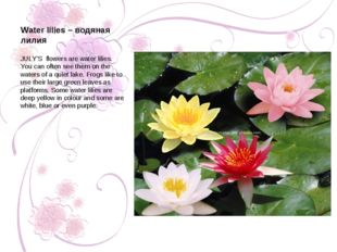 JULY'S flowers are water lilies. You can often see them on the waters of a qu
