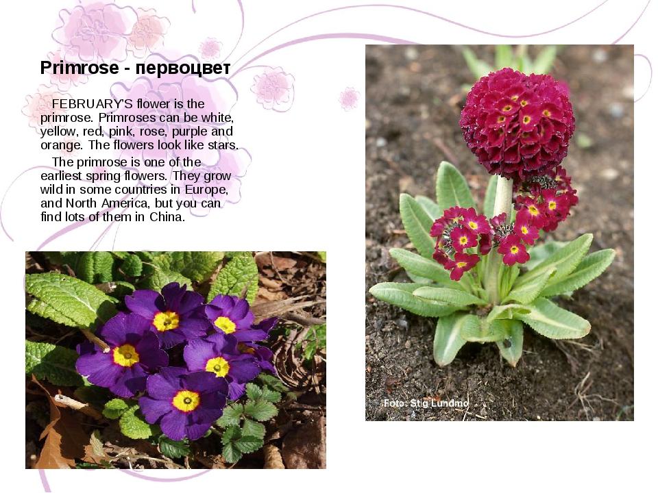 Primrose - первоцвет FEBRUARY'S flower is the primrose. Primroses can be whit...
