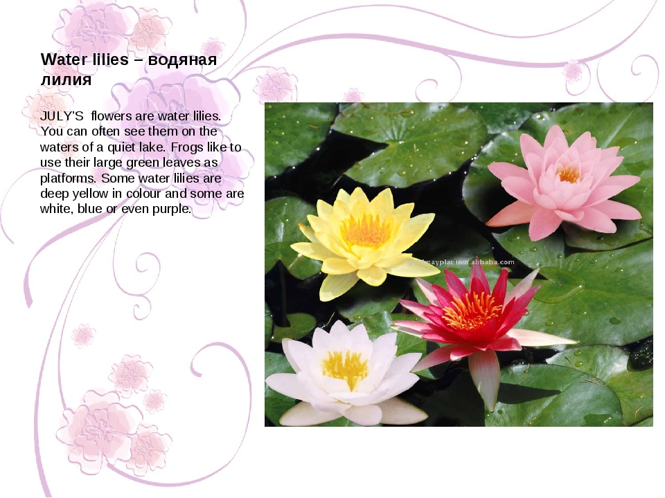 JULY'S flowers are water lilies. You can often see them on the waters of a qu...