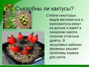 Съедобны ли кактусы? Стебли некоторых видов мелокактуса и эхинокактуса режут