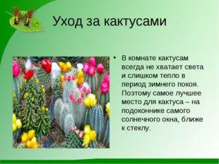 Уход за кактусами В комнате кактусам всегда не хватает света и слишком тепло