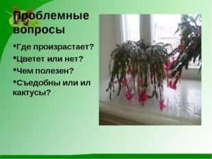 Проблемные вопросы Где произрастает? Цветет или нет? Чем полезен? Съедобны ил