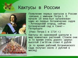 Кактусы в России Появление первых кактусов в России связано с именем Петра 1.