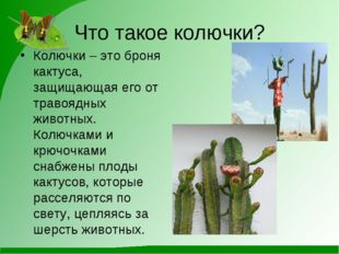 Что такое колючки? Колючки – это броня кактуса, защищающая его от травоядных