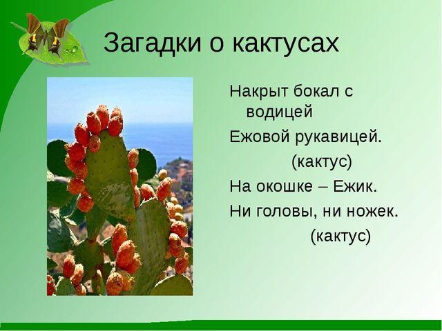 Загадки о кактусах Накрыт бокал с водицей Ежовой рукавицей. (кактус) На окошк...