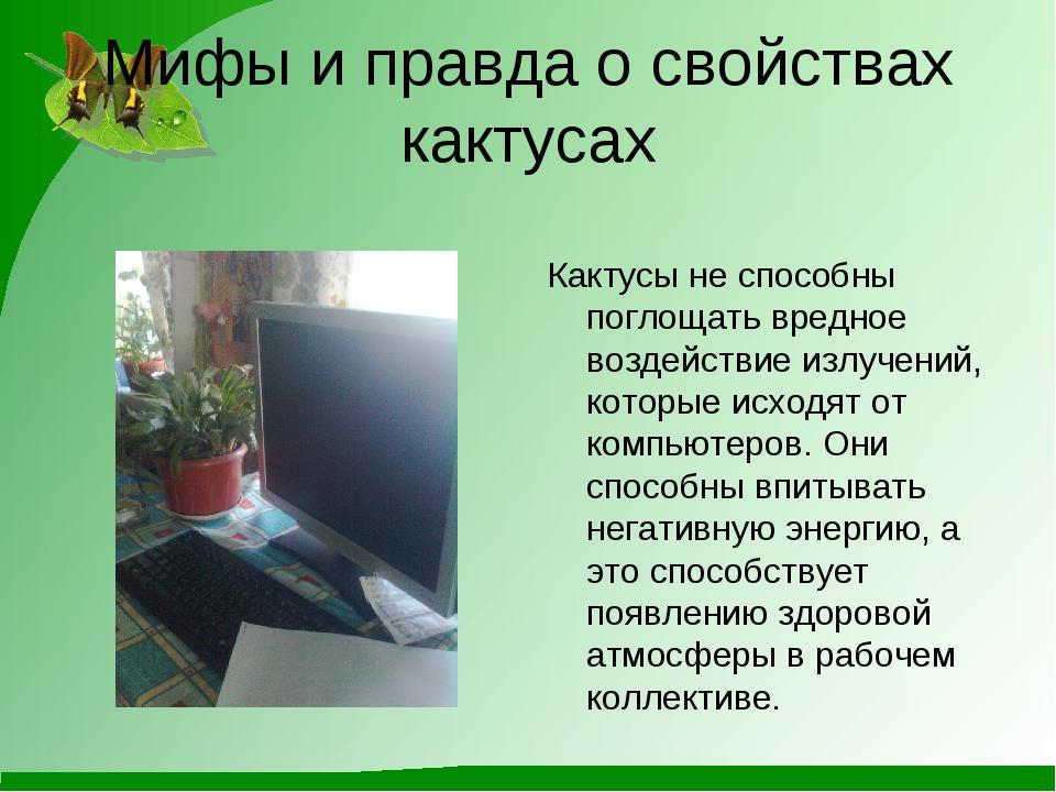 Мифы и правда о свойствах кактусах Кактусы не способны поглощать вредное возд...