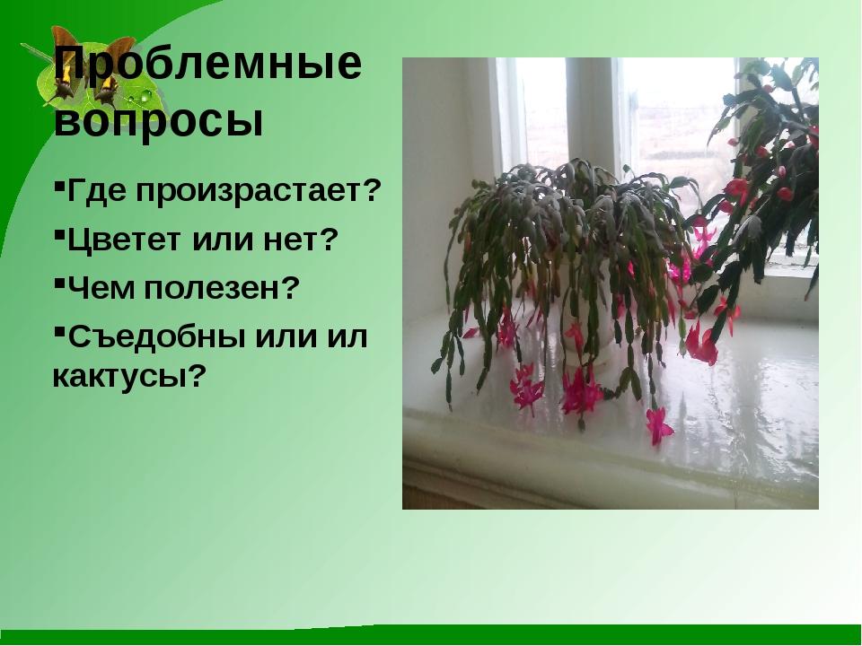Проблемные вопросы Где произрастает? Цветет или нет? Чем полезен? Съедобны ил...