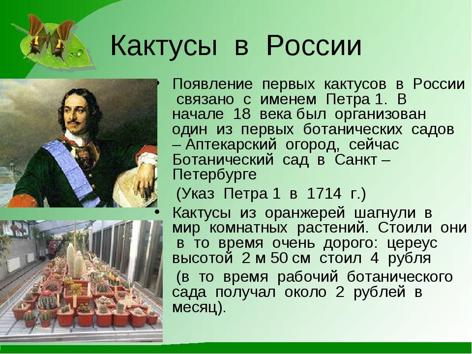 Кактусы в России Появление первых кактусов в России связано с именем Петра 1....