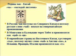 Родина чая – Китай «ча» - «молодой листочек» В Россию чай поступал из Северн