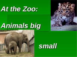 At the Zoo: Animals big and small