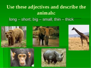 Use these adjectives and describe the animals: long – short; big – small; thi