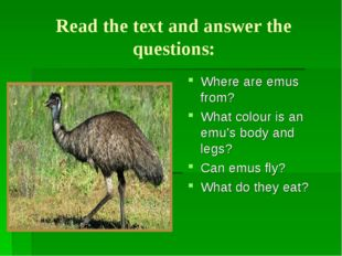 Read the text and answer the questions: Where are emus from? What colour is a