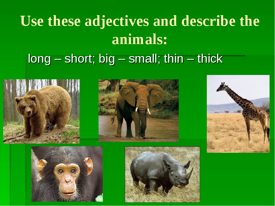 Use these adjectives and describe the animals: long – short; big – small; thi...