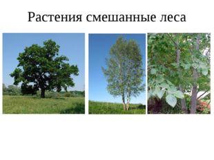 Растения смешанные леса