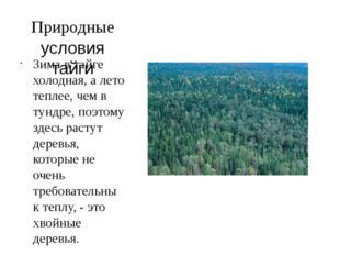 Природные условия тайги Зима в тайге холодная, а лето теплее, чем в тундре, п