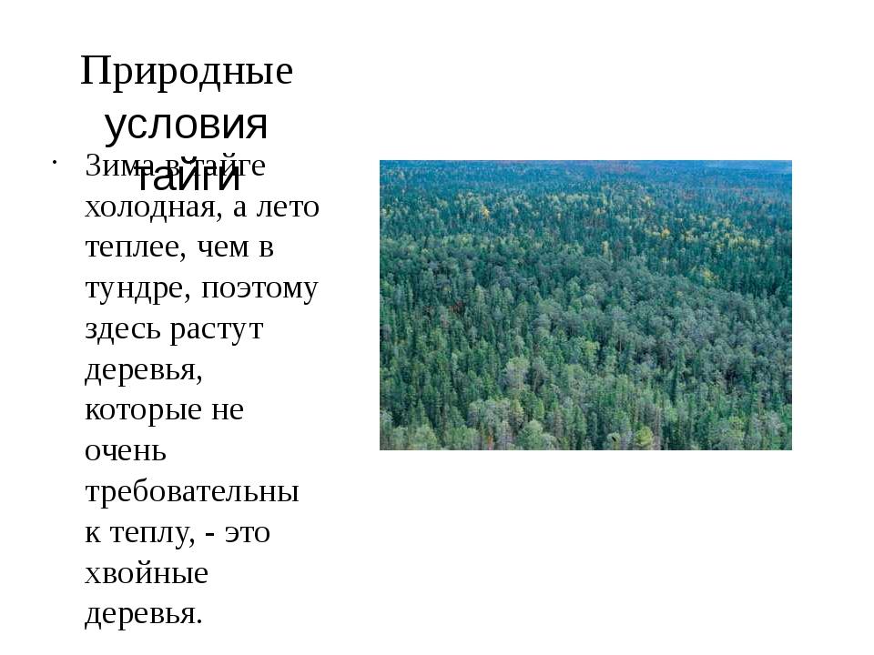 Природные условия тайги Зима в тайге холодная, а лето теплее, чем в тундре, п...
