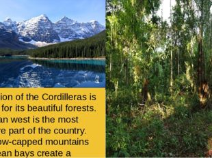 The region of the Cordilleras is famous for its beautiful forests. Canadian w