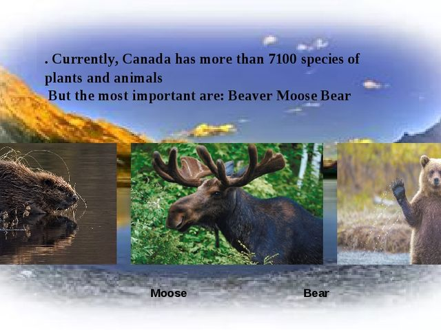 Beaver Moose Bear . Currently, Canada has more than 7100 species of plants an...