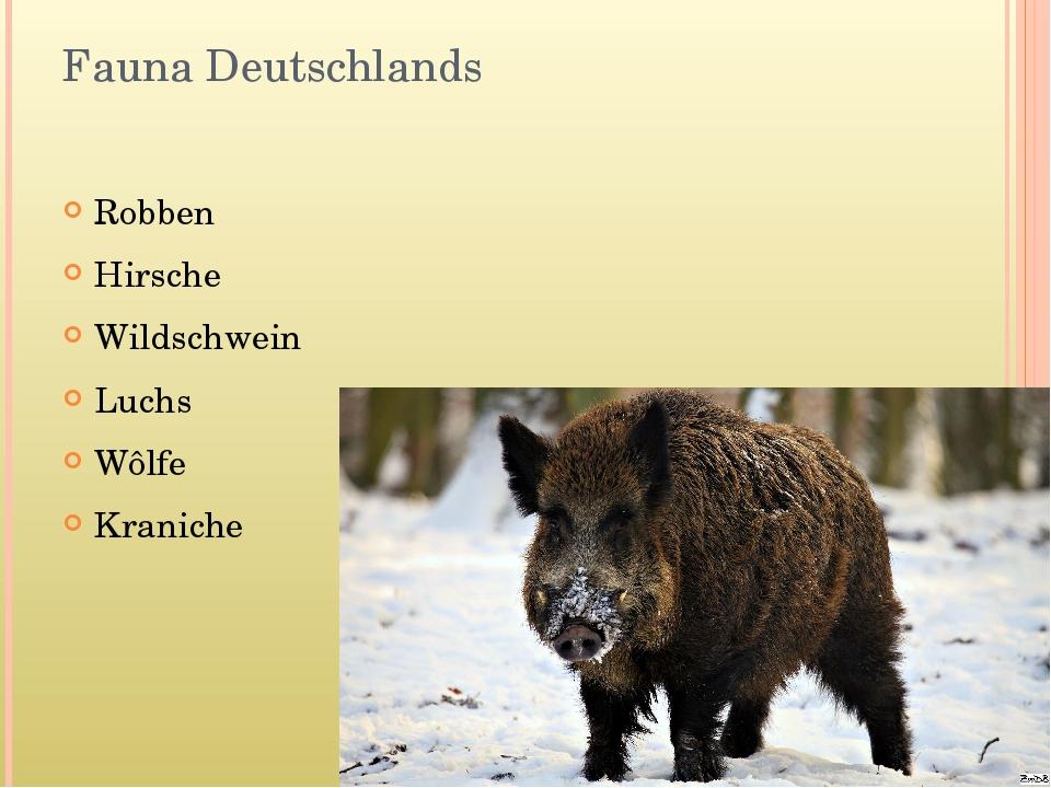 Fauna Deutschlands Robben Hirsche Wildschwein Luchs Wôlfe Kraniche