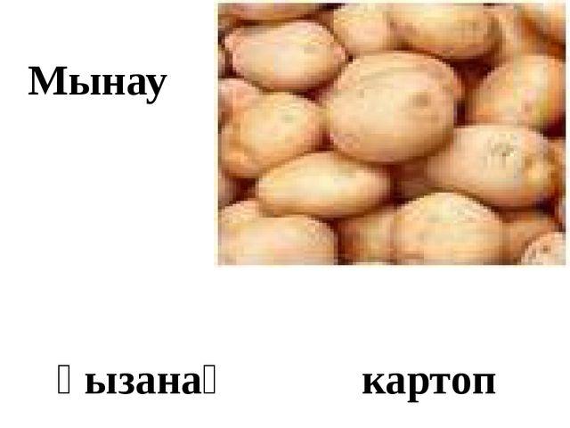 Мынау қызанақ картоп
