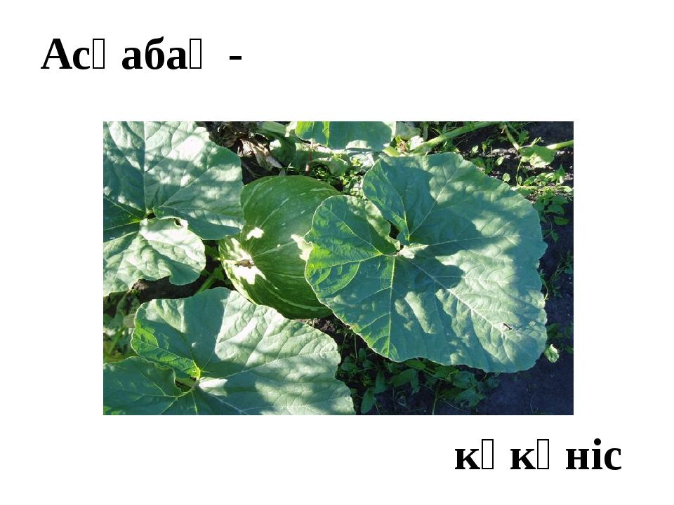 Асқабақ - көкөніс