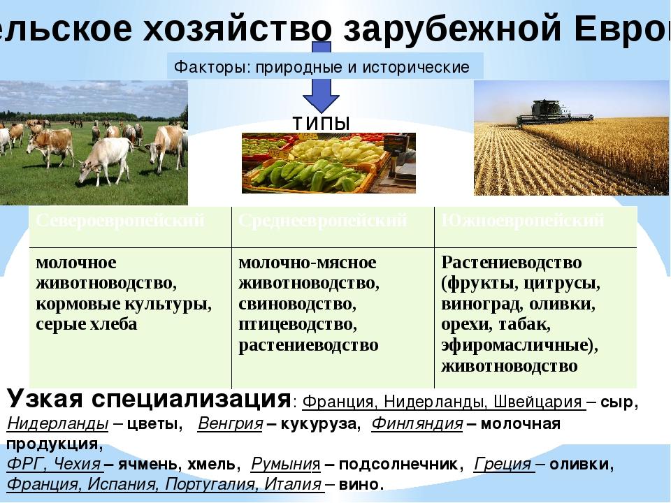 Сельское хозяйство зарубежной Европы Факторы: природные и исторические типы У...