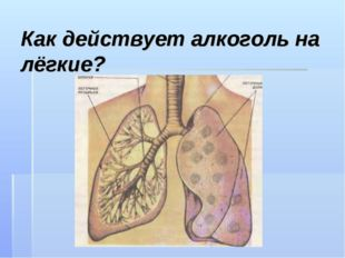 Как действует алкоголь на лёгкие?
