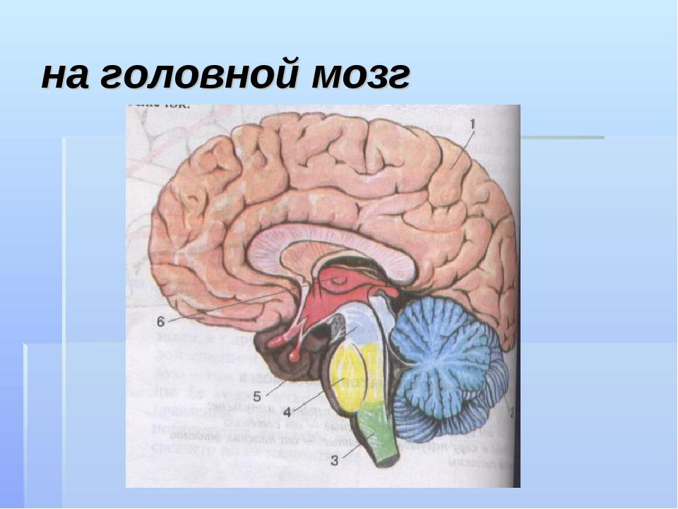на головной мозг