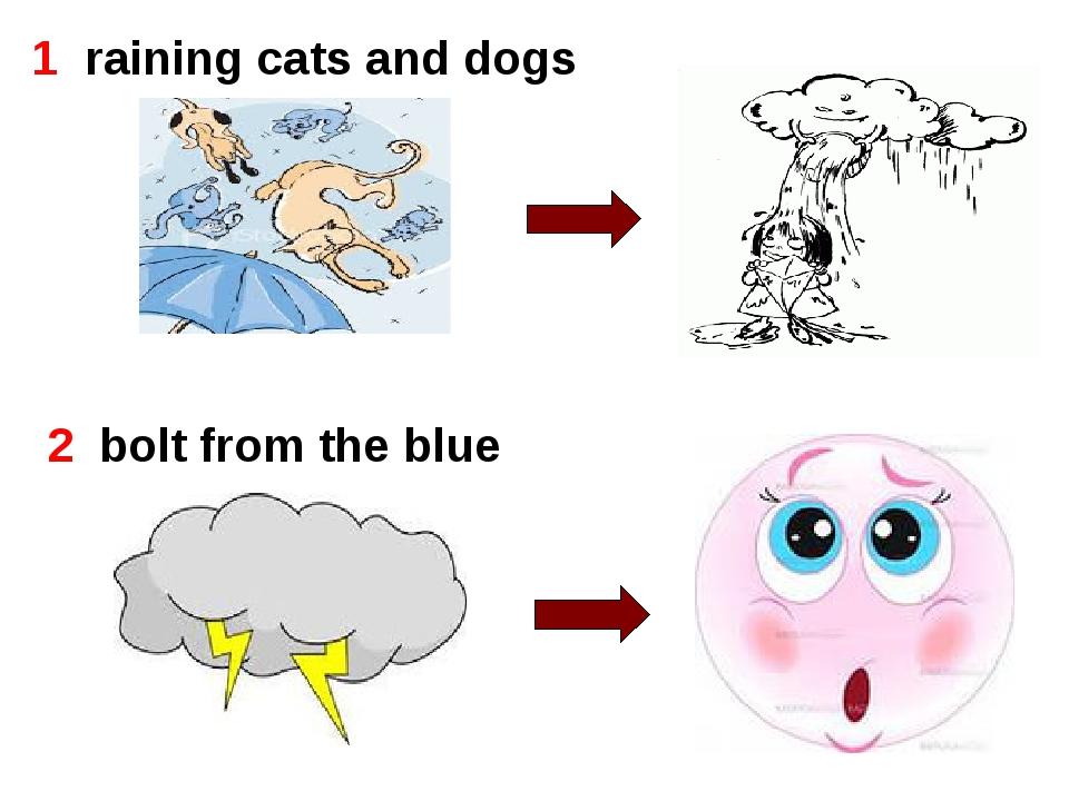 1  raining cats and dogs 1  raining cats and dogs