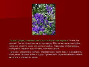 Аконит (борец, голубой лютик, Иссык-Кульский корень). До 1-1,5 м высотой. Ли