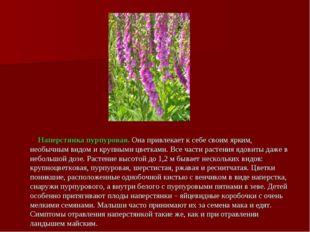 Наперстянка пурпуровая. Она привлекает к себе своим ярким, необычным видом и