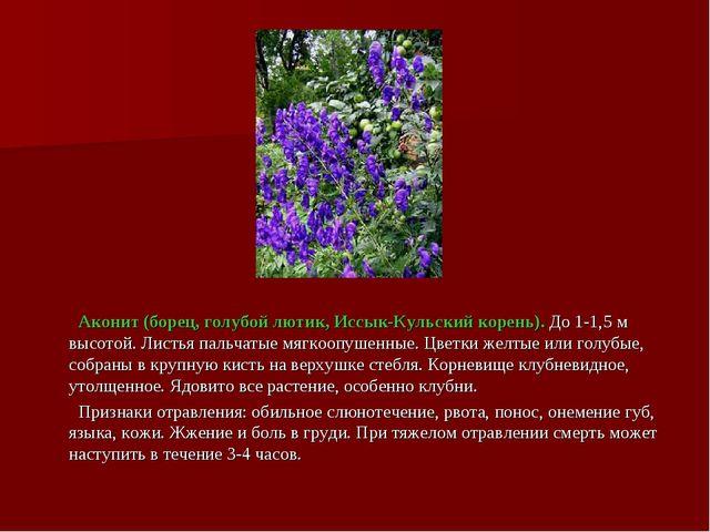Аконит (борец, голубой лютик, Иссык-Кульский корень). До 1-1,5 м высотой. Ли...