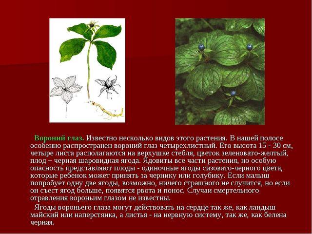 Вороний глаз. Известно несколько видов этого растения. В нашей полосе особен...