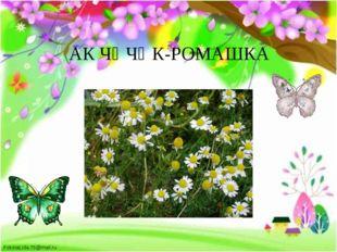 АК ЧӘЧӘК-РОМАШКА FokinaLida.75@mail.ru