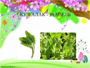 КУЗГАЛАК - ЩАВЕЛЬ FokinaLida.75@mail.ru