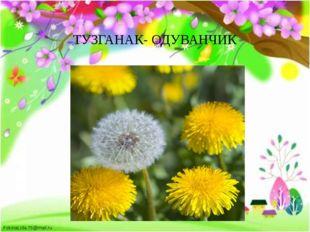 ТУЗГАНАК- ОДУВАНЧИК FokinaLida.75@mail.ru
