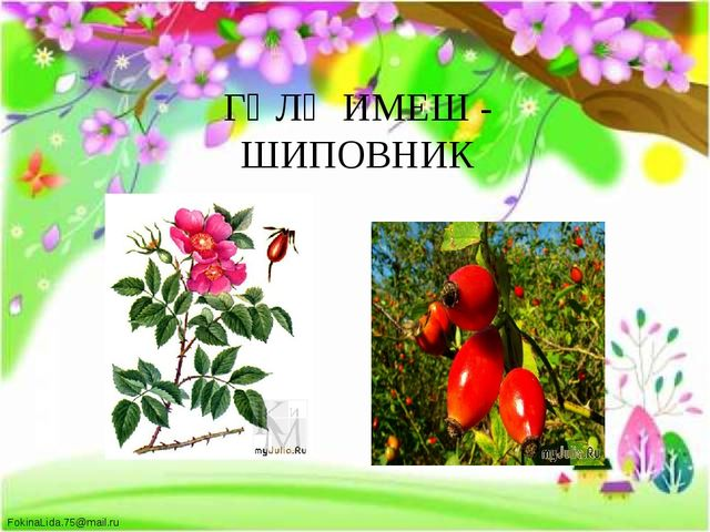 ГӨЛҖИМЕШ - ШИПОВНИК FokinaLida.75@mail.ru